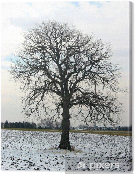 Obraz na płótnie Drzewo w zimie dziedzinie - Drzewa