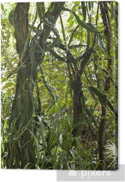Obraz na płótnie Drzewo z winorośli i trawy. - Drzewa