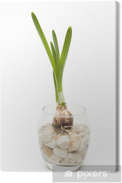 Obraz na płótnie Duffodil żarówka w wazonie, odizolowane - Dom i ogród