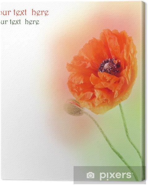 Obraz na płótnie Dwa czerwone maki na kolorowym tle - Kwiaty