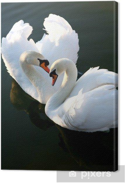 Obraz na płótnie Dwa łabędzie miłość - Ptaki