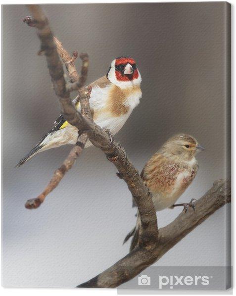 Obraz na płótnie Dwa piękne ptaki - Ptaki