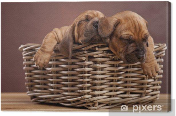Obraz na płótnie Dwa psy śpią w koszyku - Criteo