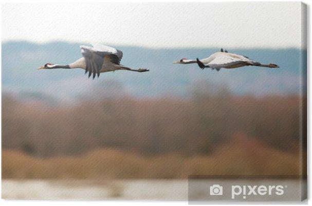 Obraz na płótnie Dwa ptaki latające żurawiem nad jeziorem - Ptaki