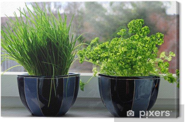Obraz na płótnie Dwa świeże zioła (szczypiorek garnki i pietruszką) na parapecie. - Przyprawy i zioła