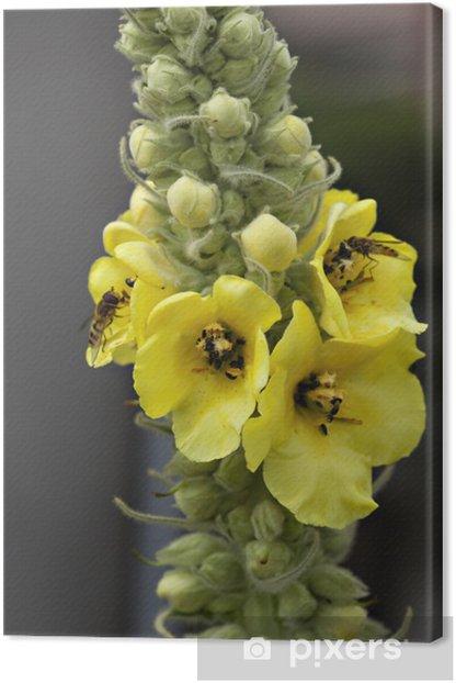 Obraz na płótnie Dziewanna - Kwiaty