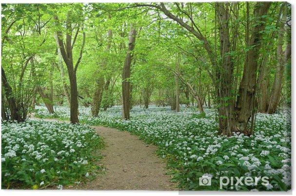 Obraz na płótnie Dziki Czosnek Growing w Woodland - Rośliny