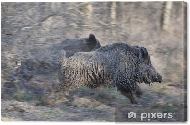 Obraz na płótnie Dziki uciekają - Ssaki