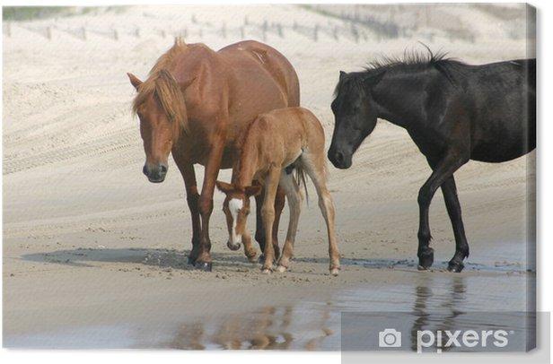 Obraz na płótnie Dzikie konie na plaży - Ssaki