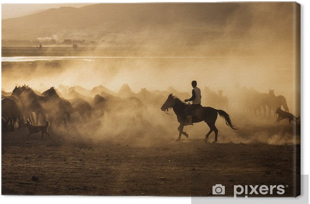 Obraz na płótnie Dzikie konie w Kapadocji o zachodzie słońca z pięknymi piaskami, biegnące i prowadzone przez cawboy - Podróże