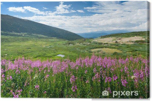 Obraz na płótnie Dzikie Kwiaty Letni krajobraz górski - Pory roku