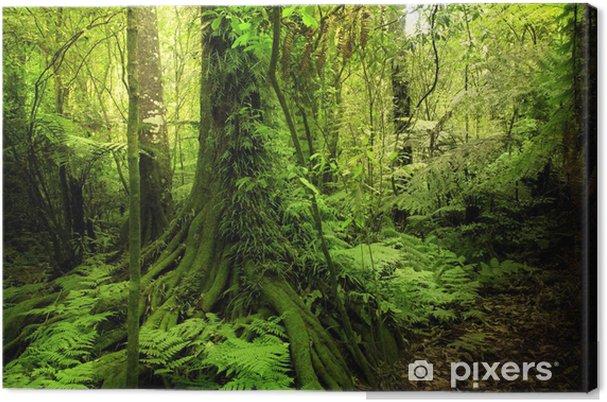 Obraz na płótnie Dżungla - Tematy