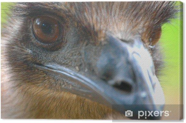 Obraz na płótnie Emu - Ptaki
