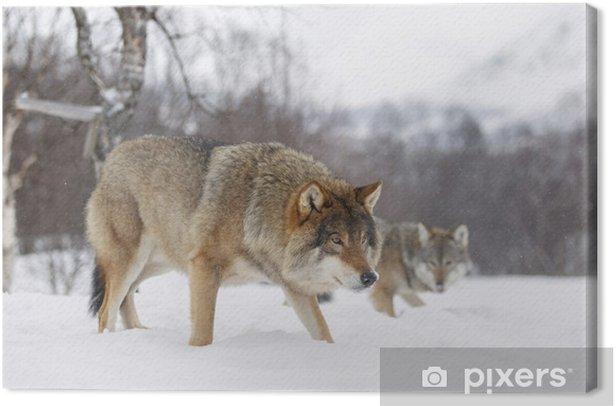 Obraz na płótnie European wolf - Tematy