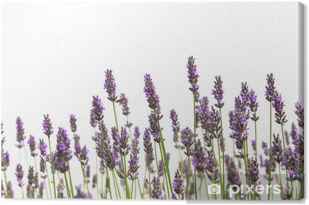 Obraz na płótnie Fioletowe kwiaty lawendy - Kwiaty