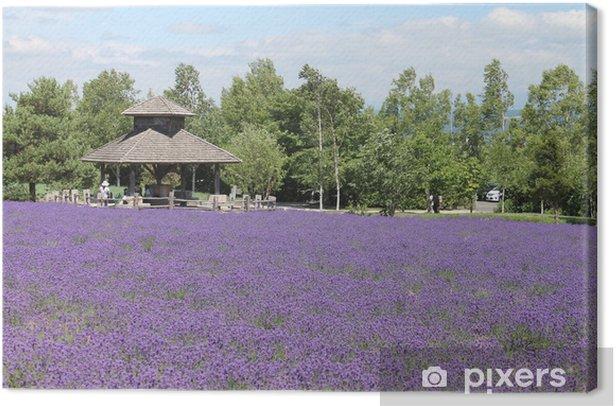 Obraz na płótnie Fioletowe pola lawendy, Tomita gospodarstwo, japonia - Azja