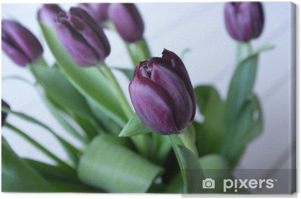 Obraz na płótnie Fioletowe tulipany bliska - Tematy