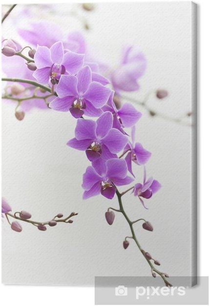 Obraz na płótnie Fioletowy Dendrobium storczyków z miękkiego światła - Dom i ogród
