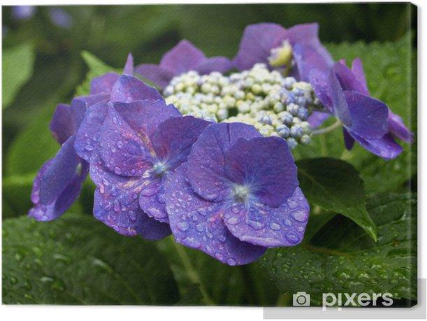 Obraz na płótnie Fioletowy Hortensja Kwiaty - Kwiaty