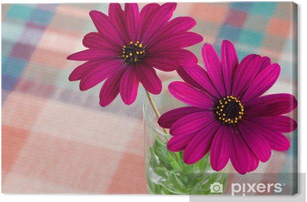 Obraz na płótnie Fioletowy kwiat stokrotka - Kwiaty