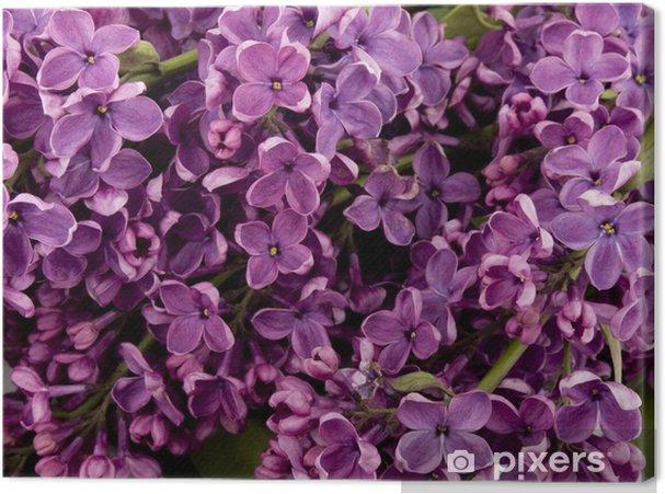Obraz na płótnie Fioletowy liliowy - Kwiaty