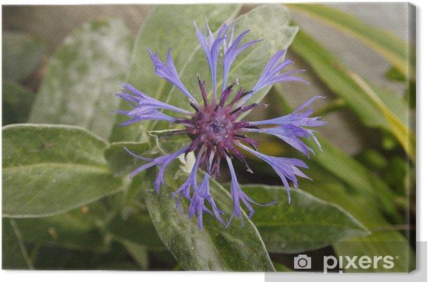 Obraz na płótnie Fioletowy Proza - Kwiaty
