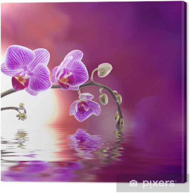Obraz na płótnie Fioletowy storczyk z odbicia w wodzie -
