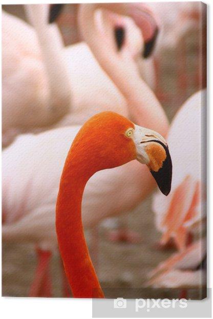 Obraz na płótnie Flamencos - Ptaki
