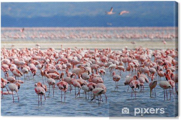 Obraz na płótnie Flamingów na jeziorze - Afryka