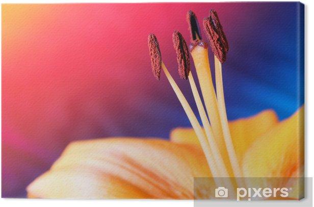 Obraz na płótnie Floks - Kwiaty