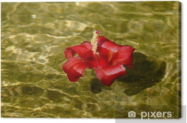 Obraz na płótnie Flor de Majagua - Kwiaty