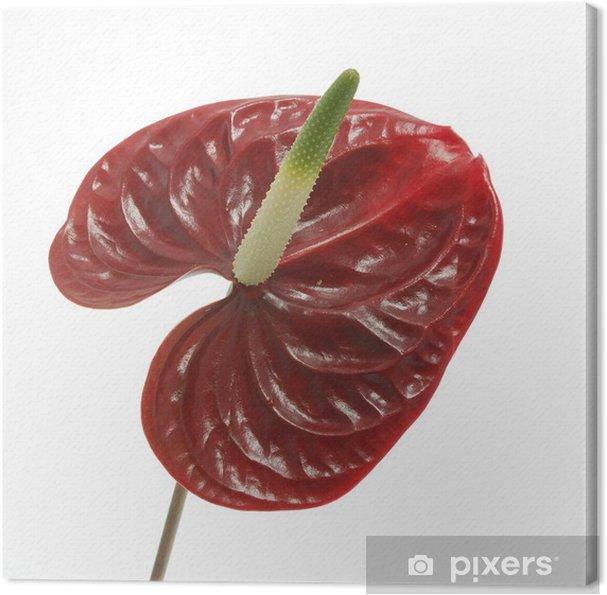 Obraz na płótnie Flower 30 - Kwiaty
