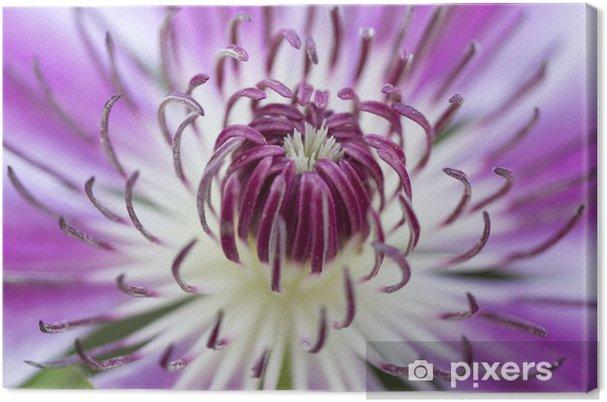 Obraz na płótnie Flower - makro - zbliżenie - Kwiaty