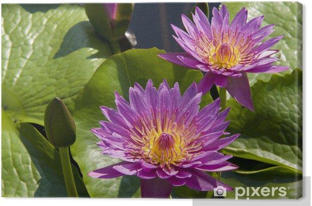 Obraz na płótnie Fowers fioletowe - Kwiaty