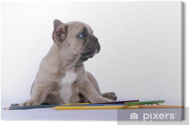 Obraz na płótnie French Bulldog Dziecko & Colour Ołówki - Ssaki