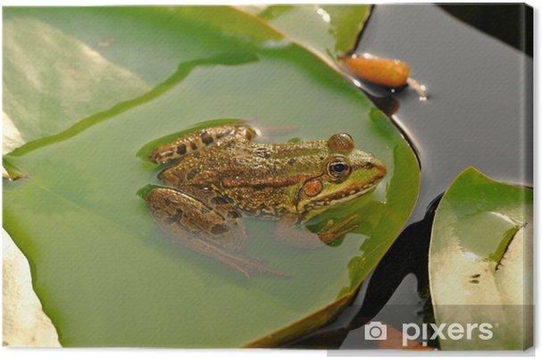 Obraz na płótnie Frog Pond - Inne Inne