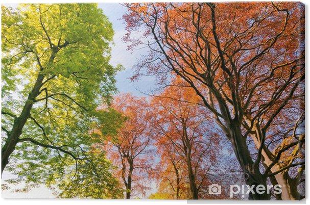 Obraz na płótnie Gałęzie i pnie drzew na wiosnę. - Pory roku