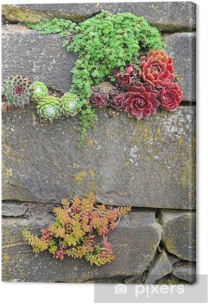 Obraz na płótnie Garden wall - Rośliny