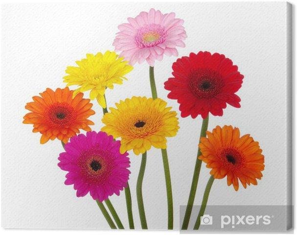 Obraz na płótnie Gerbera Daisies - Kwiaty
