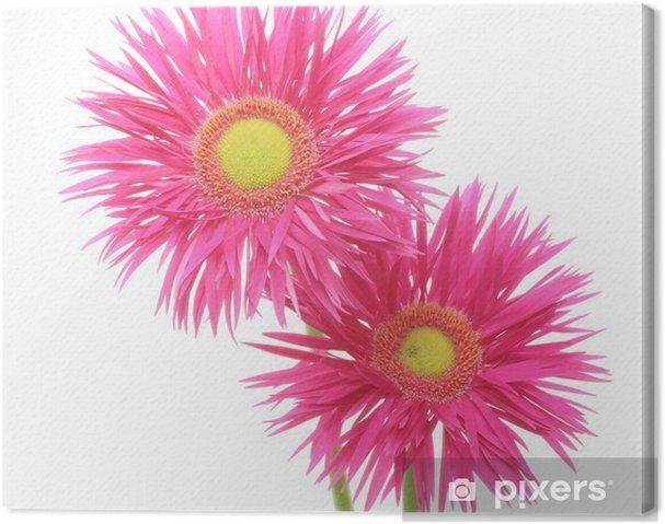 Obraz na płótnie Gerbera - Kwiaty