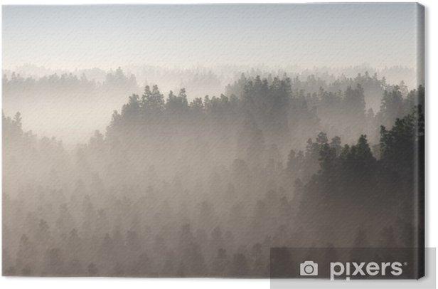 Obraz na płótnie Gęsty las sosnowy w porannej mgle. - Krajobrazy