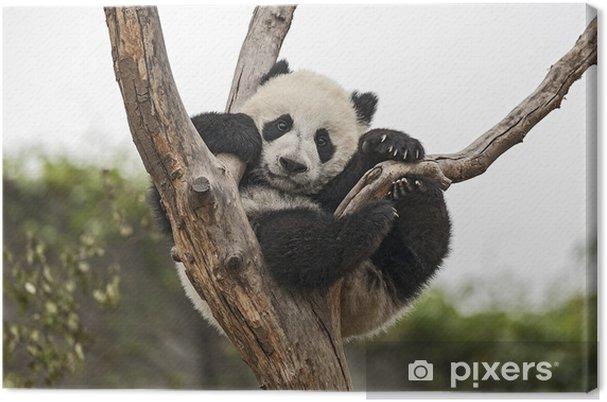 Obraz na płótnie Giant Baby Panda na drzewie wiszące - Tematy