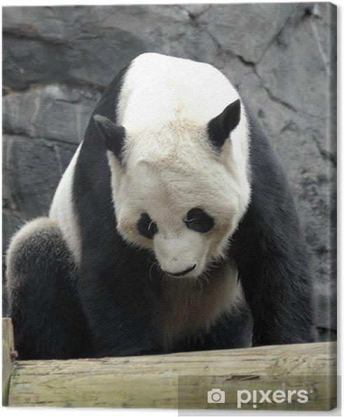 Obraz na płótnie Giant panda2 - Tematy