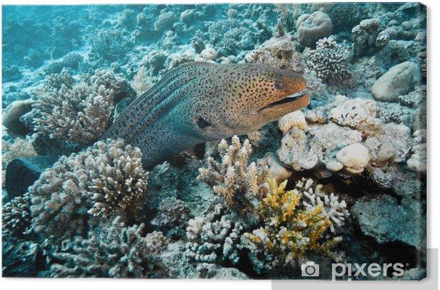 Obraz na płótnie Gigant moray - Zwierzęta żyjące pod wodą