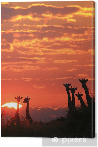 Obraz na płótnie Giraffe - African Wildlife Background - Sunset Wonder - Zwierzęta