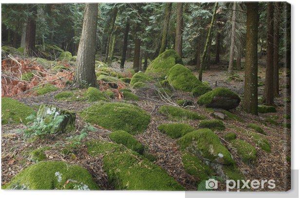 Obraz na płótnie Głęboko w lesie - Lasy