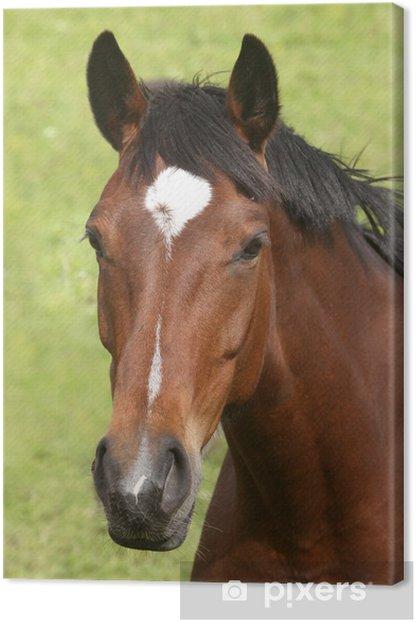 Obraz na płótnie Głowa konia Brown - Ssaki