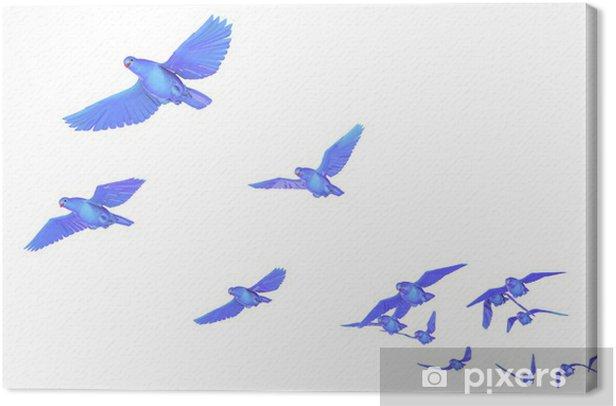 Obraz na płótnie Gołąb - Ptaki