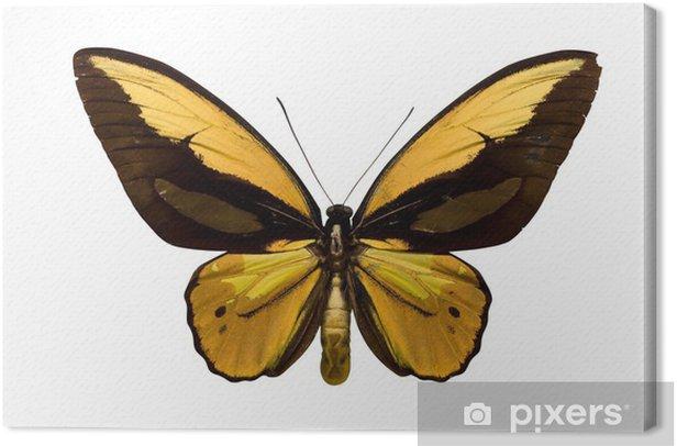 Obraz na płótnie Golden butterfly - Inne Inne