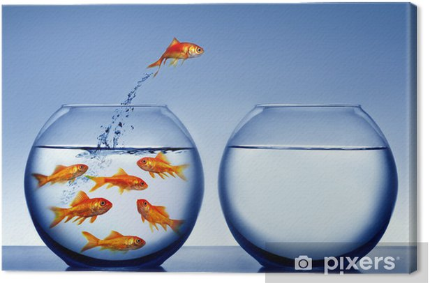 Obraz na płótnie Goldfish skoków z wody - Tematy